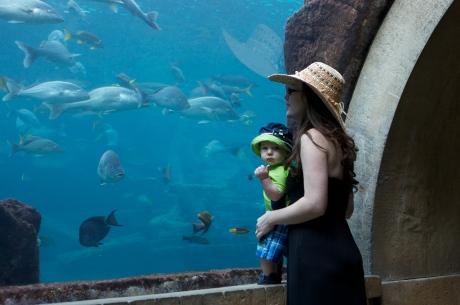 barbxmanatlantisfish